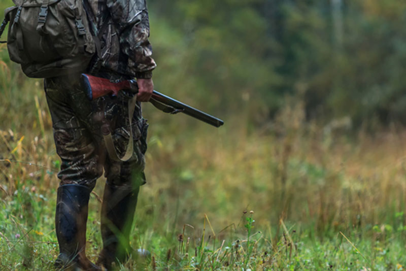 Hunter in camo walking to woods with shotgun