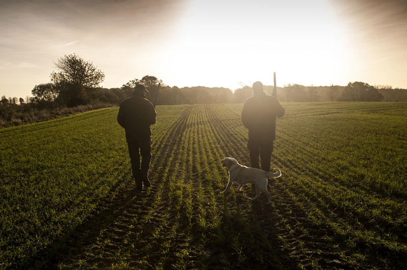 Two hunters and dog walking to forest across field at dawn