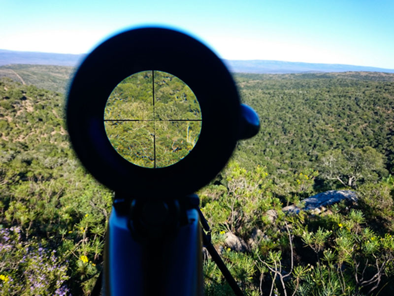 Looking through a rifle scope at the cross-hairs focused on a group of forest trees