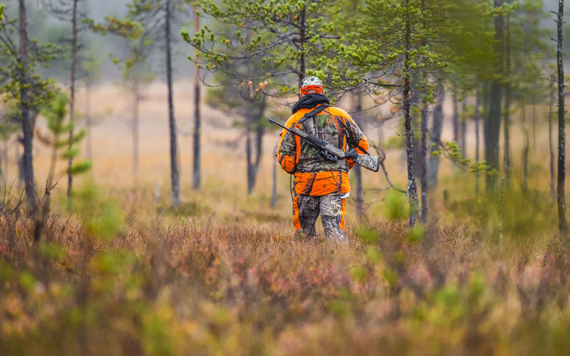 Hunter in camo and blaze orange walking in forest with rifle on his back