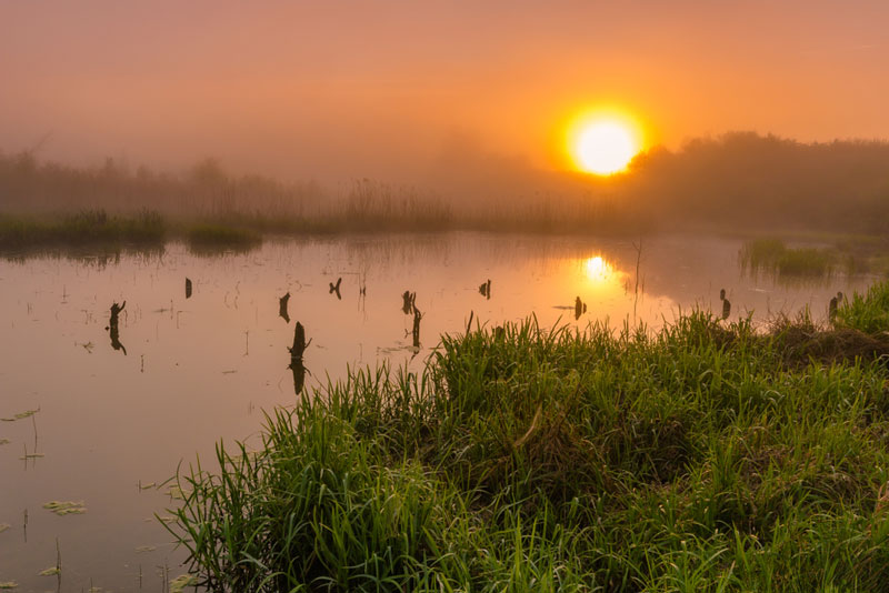 Fog over the swamp at sunrise